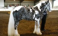 Silver Black Horse 26 Free Hd Wallpaper