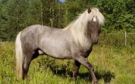 Silver Black Horse 28 Cool Hd Wallpaper