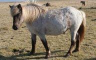 Silver Black Horse 42 Free Hd Wallpaper