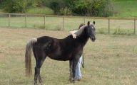 Silver Black Horse 7 High Resolution Wallpaper