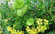 Black And Yellow Dress Vine 25 Free Hd Wallpaper
