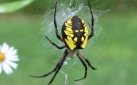 Black And Yellow Spider 13 Cool Hd Wallpaper