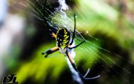 Black And Yellow Spider 15 Cool Hd Wallpaper