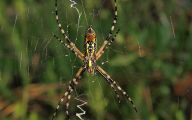 Black And Yellow Spider 46 Cool Hd Wallpaper