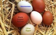 Green And Black Easter Eggs 33 Background Wallpaper