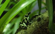 Green And Black Poison Dart Frog 10 Cool Hd Wallpaper