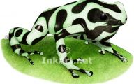 Green And Black Poison Dart Frog 18 Wide Wallpaper