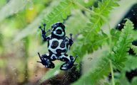 Green And Black Poison Dart Frog 30 Free Hd Wallpaper
