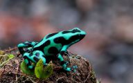 Green And Black Poison Dart Frog 37 Background