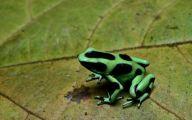 Green And Black Poison Dart Frog 48 High Resolution Wallpaper