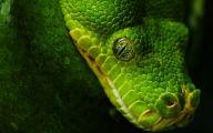Green And Black Snake 19 Hd Wallpaper
