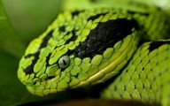 Green And Black Snake 29 Background Wallpaper
