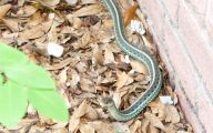 Green And Black Snake 51 Free Hd Wallpaper