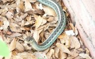Green And Black Snake 61 High Resolution Wallpaper