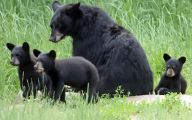 Black Bear 1 Hd Wallpaper