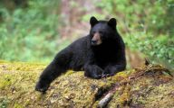 Black Bear 21 Cool Wallpaper