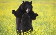 Black Bear 22 Background
