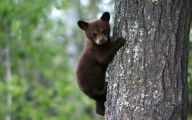 Black Bear 32 Wide Wallpaper