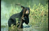 Black Bear 33 Cool Hd Wallpaper