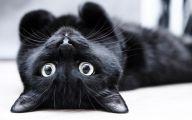 Black Cat 19 Background Wallpaper