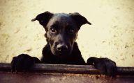 Black Dog 10 Widescreen Wallpaper