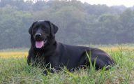 Black Dog 16 Background