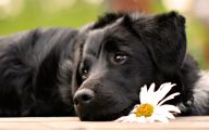 Black Dog 17 Widescreen Wallpaper