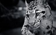 Animals Black And White 20 Desktop Background