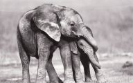 Animals Black And White 29 Hd Wallpaper