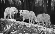 Animals Black And White 36 Cool Wallpaper