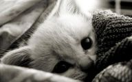 Black And White Animals  5 Free Wallpaper