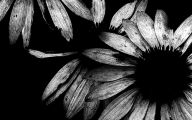 Black And White Art Photography 24 Cool Hd Wallpaper