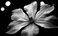 Black And White Art Photography 30 High Resolution Wallpaper