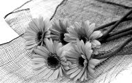 Black And White Images  9 Widescreen Wallpaper