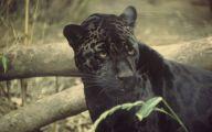 Black Animals Images 19 Background