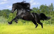 Black Animals Images 9 Free Wallpaper