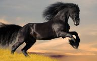 Black Animals Wallpaper 10 Background Wallpaper