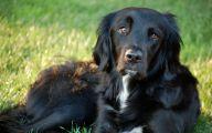Black Dog 21 Widescreen Wallpaper
