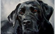 Black Dog 34 Background
