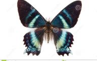 Blue And Black Butterfly  17 Free Wallpaper