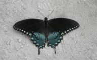 Blue And Black Butterfly  4 Cool Hd Wallpaper
