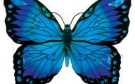 Blue And Black Butterfly  41 Widescreen Wallpaper