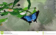 Blue And Black Butterfly  9 Cool Wallpaper
