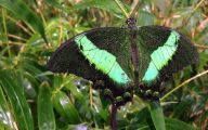 Green And Black Butterfly  12 High Resolution Wallpaper
