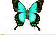Green And Black Butterfly  15 Hd Wallpaper
