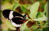 Green And Black Butterfly  25 Free Hd Wallpaper