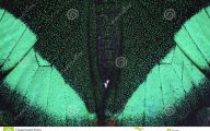 Green And Black Butterfly  28 Free Wallpaper