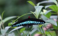 Green And Black Butterfly  30 Background Wallpaper