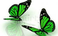 Green And Black Butterfly  34 Hd Wallpaper
