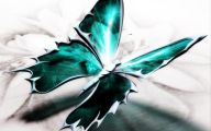 Green And Black Butterfly  35 Cool Wallpaper